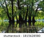 Camecuaro Lake And Trees...
