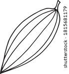 cocoa bean hand drawn vector... | Shutterstock .eps vector #1815681179