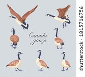 Canada Geese. Hand Drawn Set Of ...