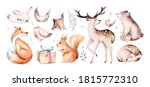 Watercolor Deer With Fawn ...