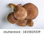 Group Of Jersey Cow Mushrooms...