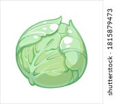 cabbage or white cabbage hand... | Shutterstock .eps vector #1815879473