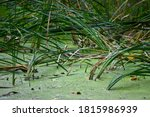 A Pool Of Stagnant Water In...