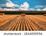 Wheat Straw In Square Bales Of...