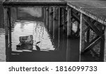 Monochrome Image Of An...