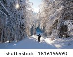 Cross country skiing in the...