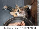 Top View Of Desperate Cat...