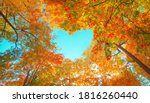 Autumn forest background. Vibrant color tree, red orange foliage in fall park. Nature change Yellow leaves in october season Sun up in blue heart shape sky Sunny day weather, bright light banner frame