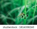 Dragonfly On Leaf.close Up...