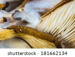 Small photo of Delicious Pleurotus Agaricales Mushrooms