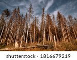 Forest Of Dead Trees. Forest...