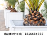 The Base Of A Palm Tree In A...