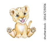 Cute Lion Cub Isolated On White ...