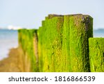 Closeup Of Wooden Poles Covere...