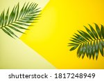 Frame Of Tropical Leaves Palms...
