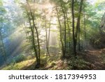 Bright Sun Rays Through Trees...