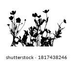 Vector Buttercup Flowers  ...