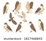 set of predatory bird cute...   Shutterstock .eps vector #1817468843