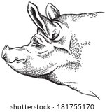 black and white sketch of a pig'... | Shutterstock .eps vector #181755170