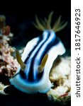 Psychedelic Colorful Nudibranc...