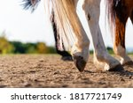 Close Up Of A Horse's Hind Legs ...