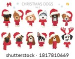 Dog Portraits In Santa Hats An...