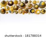 bar of sea shells in upper...   Shutterstock . vector #181788314