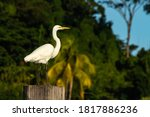 White Heron Perched On The Edge ...