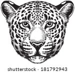 black and white vector sketch...   Shutterstock .eps vector #181792943