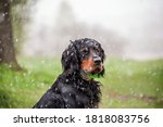 Close Up Portrait Of A Dog...