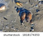 River Mussels By The River