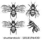 vector engraving illustration... | Shutterstock .eps vector #1818196430