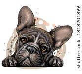 french bulldog. wall sticker.... | Shutterstock .eps vector #1818201899