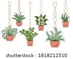flowers in a pot macrame pots ... | Shutterstock .eps vector #1818212510