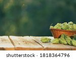 Green Ripe Hop Cones In A...