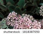 it is beautiful pink summer... | Shutterstock . vector #1818387050