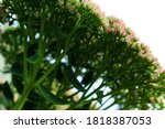 it is beautiful pink summer... | Shutterstock . vector #1818387053