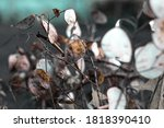 this is modern leaf plant | Shutterstock . vector #1818390410