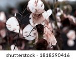 this is modern leaf plant | Shutterstock . vector #1818390416