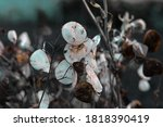 this is modern leaf plant | Shutterstock . vector #1818390419