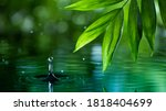 Fresh Green Leaves With Water...
