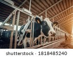 Agriculture Industry  Dairy...