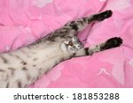 sleeping cat in blur background ... | Shutterstock . vector #181853288
