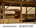Cow Resting In Cowshed In Sout...