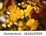 autumn background with golden... | Shutterstock . vector #1818635939