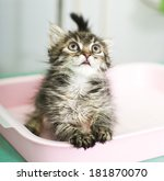 Adorable Kitten Sitting In Cat...