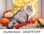 Fat Fluffy Gray Cat Sits On The ...