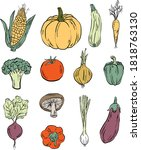 colorful hand drawn vegetables...   Shutterstock .eps vector #1818763130