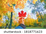 Small photo of Hand holding red autumn leaf closeup. Maple fall leaves in park. Hello october concept. Nature change mood. Yellow sunny forest on orange color background. Pov view up blue sky. Happy gold tree season