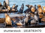 Cute Sea Lions At Pier 39...